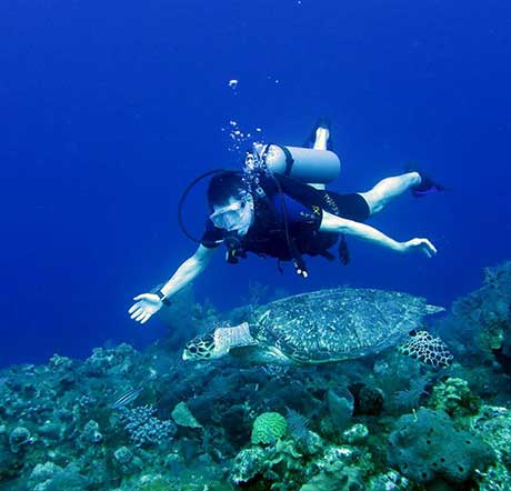 Diver with Hawksbill Turtle, Provo