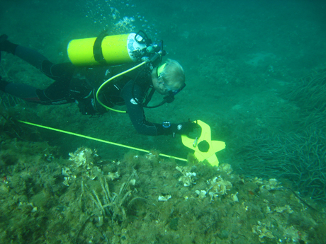 Transect through posidonia beds