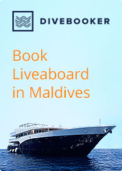 Book Maldives Liveaboard