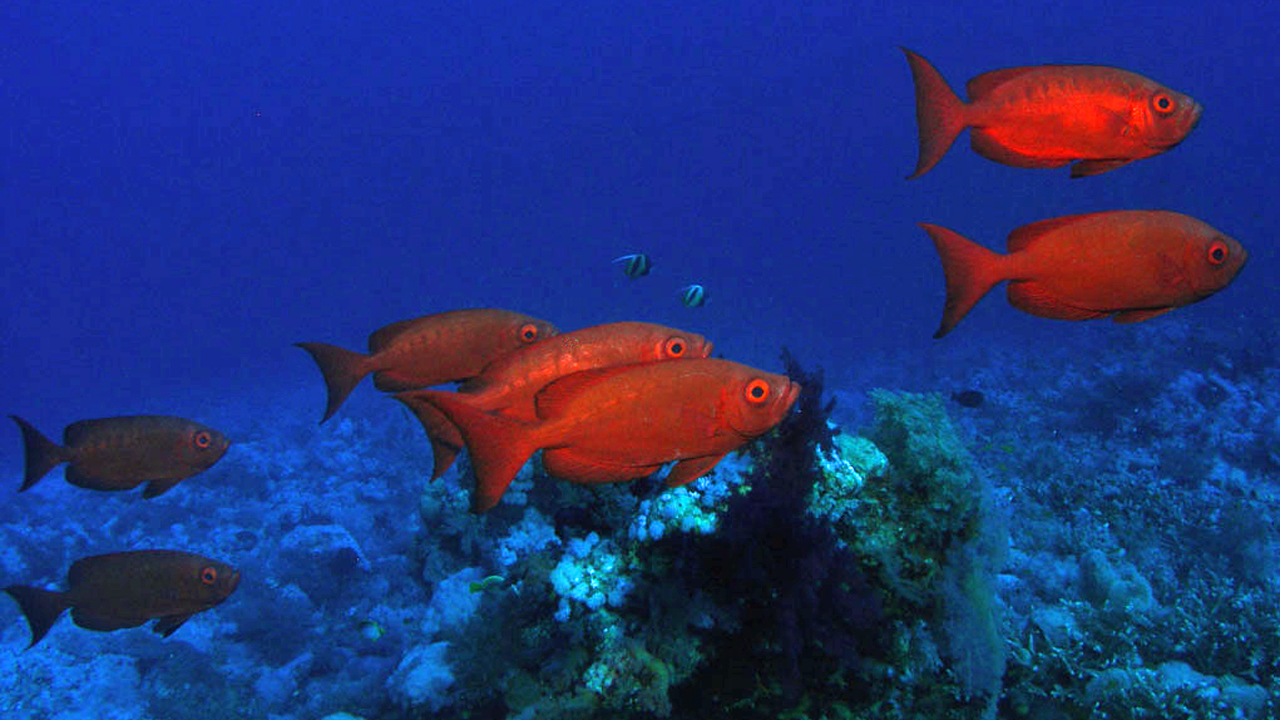Red Sea Fish Photo Guide Marine Life Pictures And Identification
