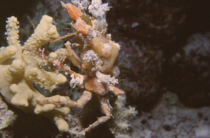 Photograph of Crab