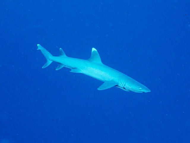Best Travel Insurance For Diving