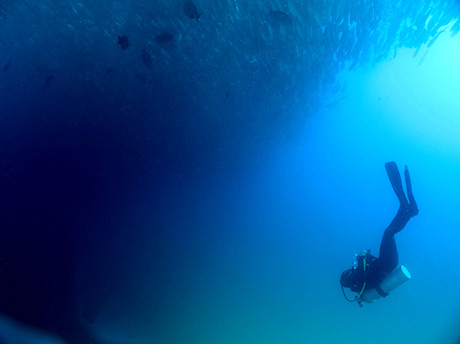 Diver and huge ball of fish