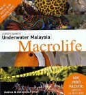 A divers' guide to Underwater Malaysia Macrolife