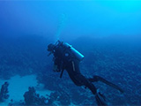 Diver in Red Sea