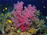 Beautiful soft coral
