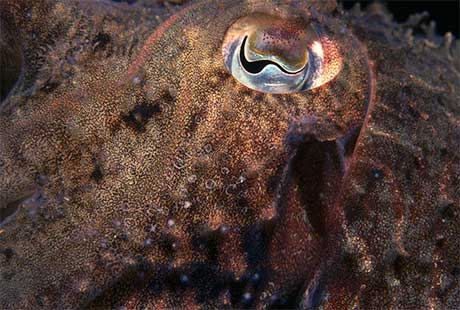 Eye of the cuttlefish, taken in Madeira