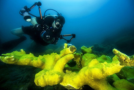 Diver with underwater camera equipment