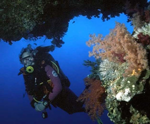 Diving the Red Sea with corals