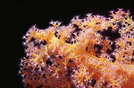 Colourful soft coral