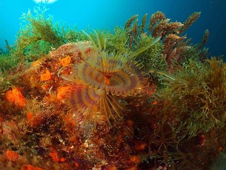 Azores underwater photo