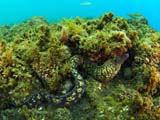 Moray Eel, Santa Cruz Azores by Tim Nicholson