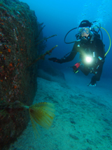 Diver in MonteGuia, Azores by Tim Nicholson