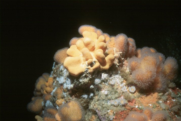 Soft corals Photo