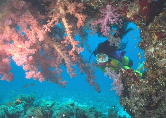 Photograph of Diver and Soft Corals in Saudi Arabia