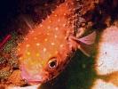 10% off Scuba Diving Insurance