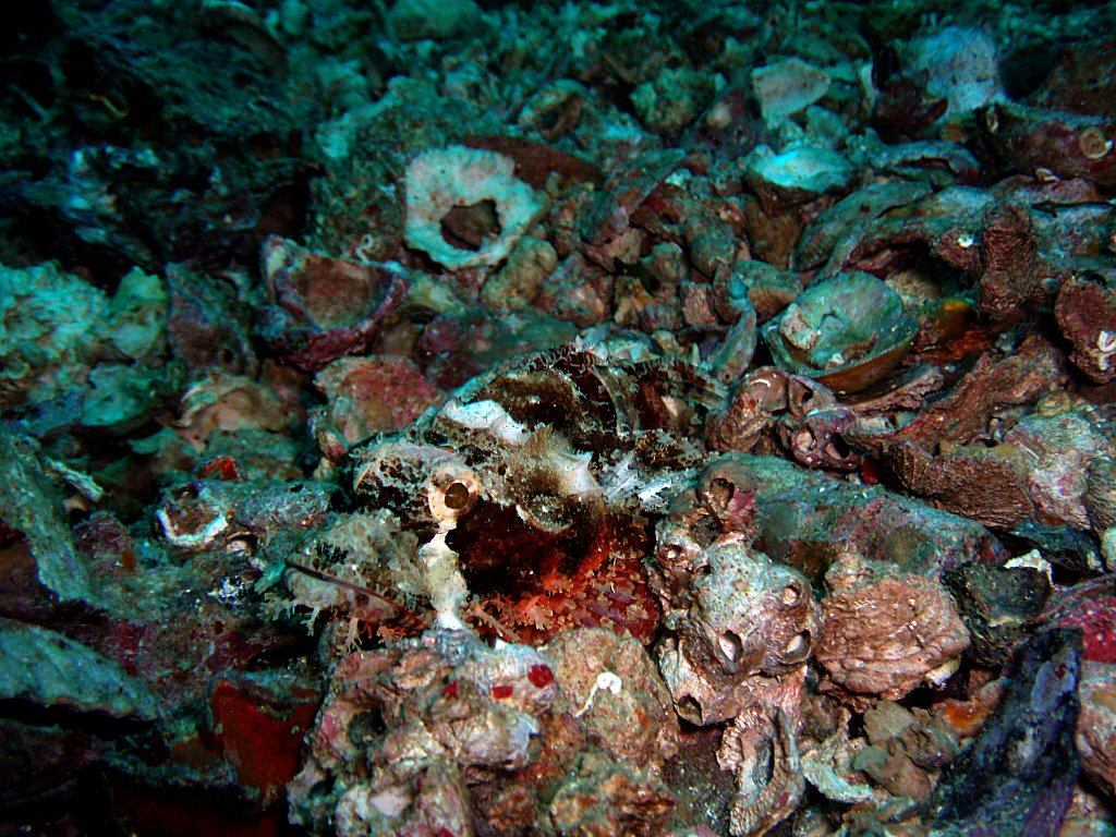 Stonefish picture in Malapascua