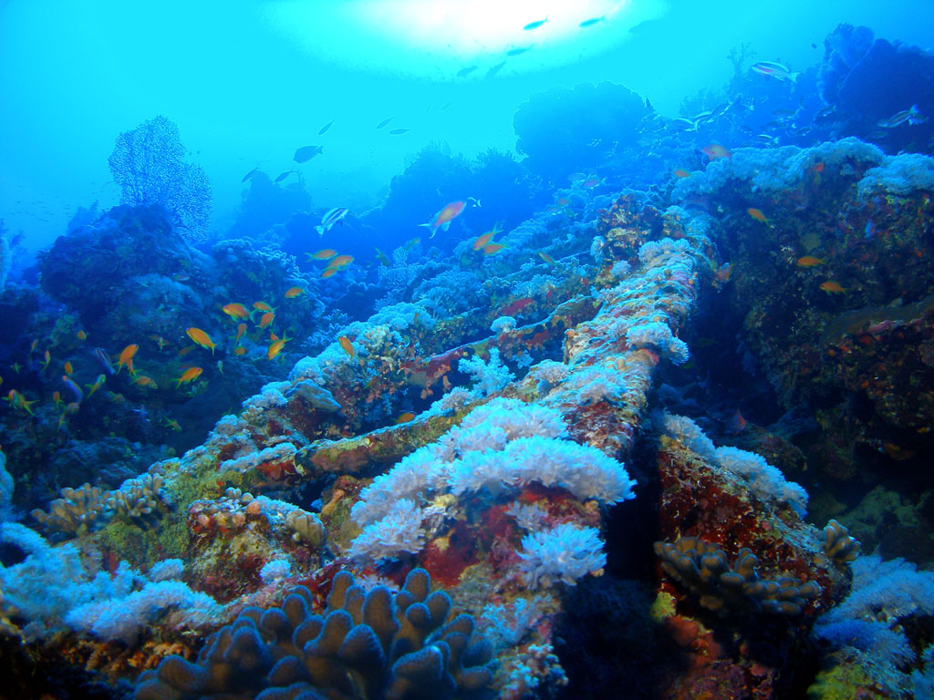 Coral climbing ladder Photo