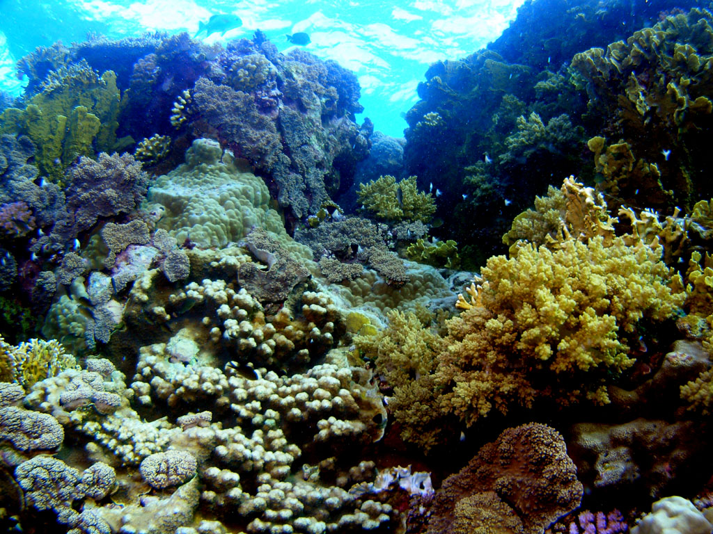 Coral Reef Photo