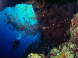Soft Coral, Dungus Reef, Red Sea