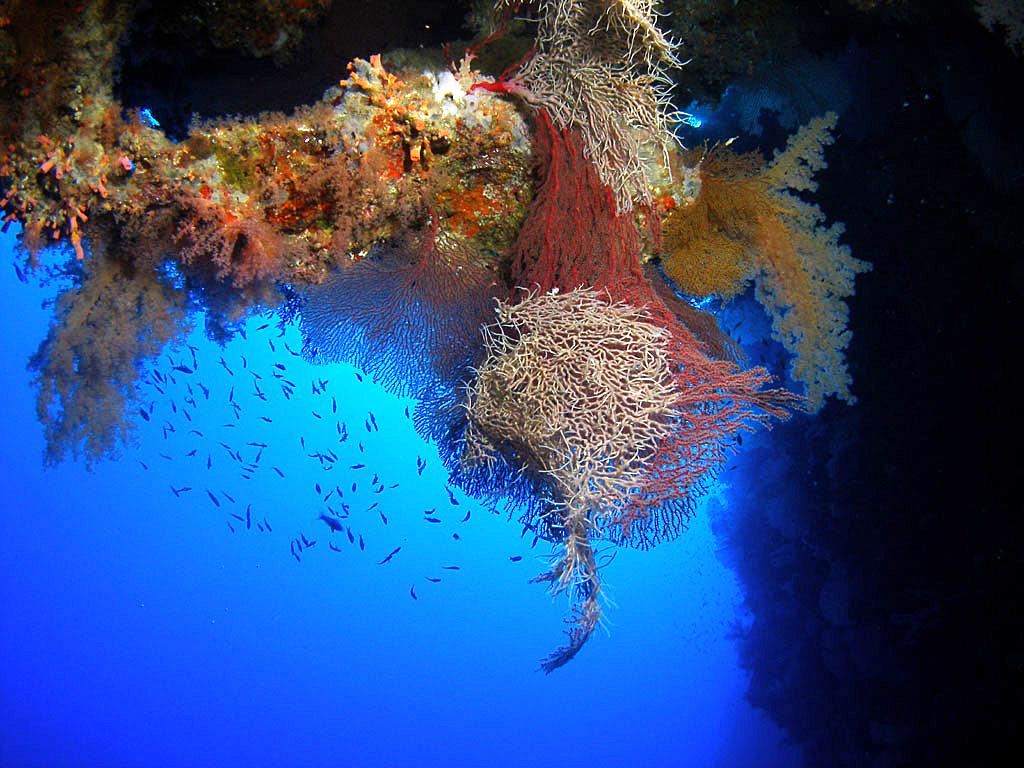 World 39 s 100 best dive sites scuba travel - Best dive sites ...