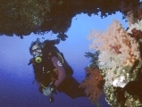 SCUBA Travel webmaster with soft corals